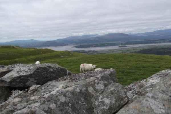 Wales_443
